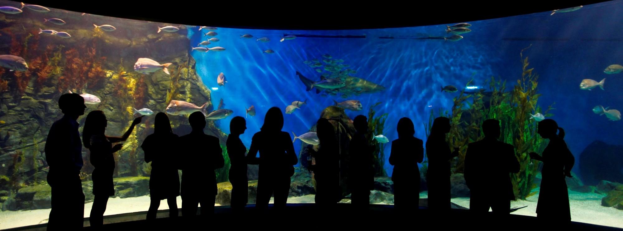 Sea Life Melbourne Aquarium Book Amp Save With Venuemob